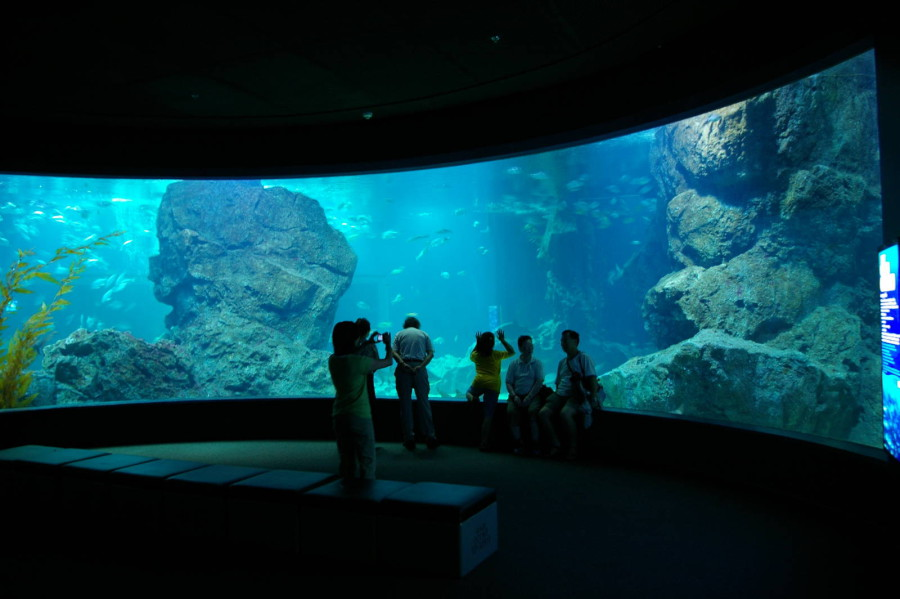 40_siam_ocean_world_bangkok_9_-75398