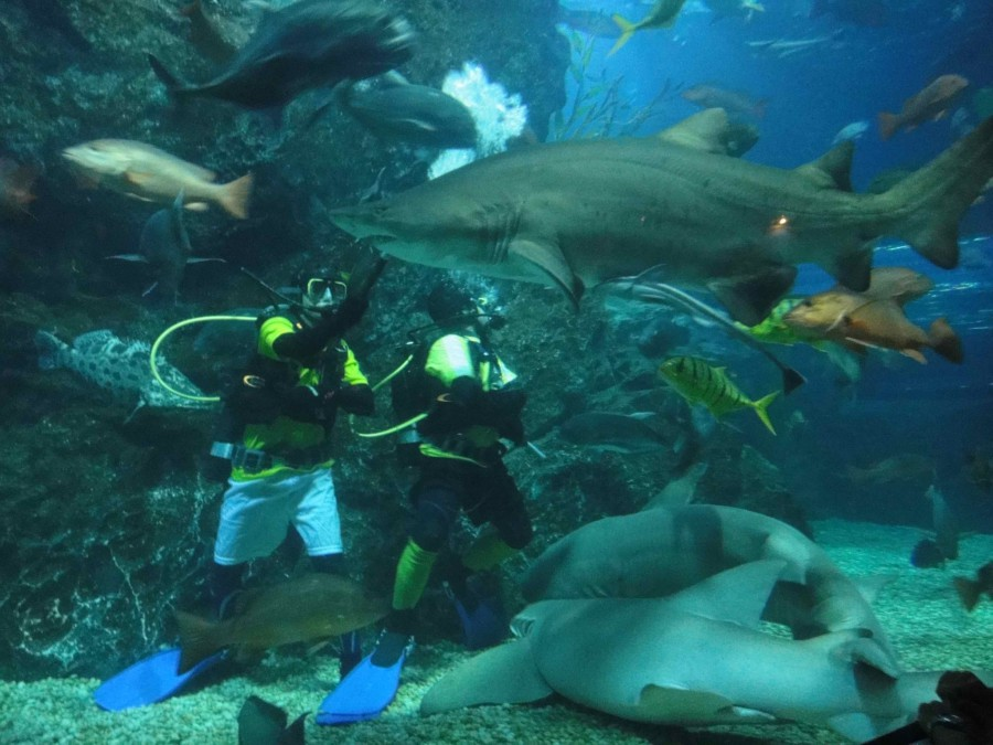 sharks_siam_ocean_world