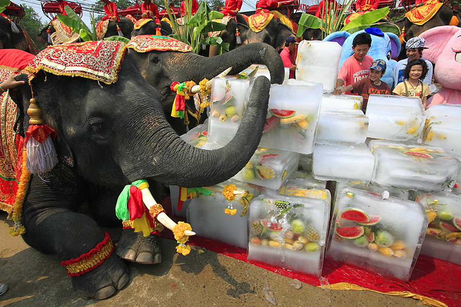 Elephants enjoy block of ice containing frozen fruit during Thailand's National Elephant day in Ayutthaya