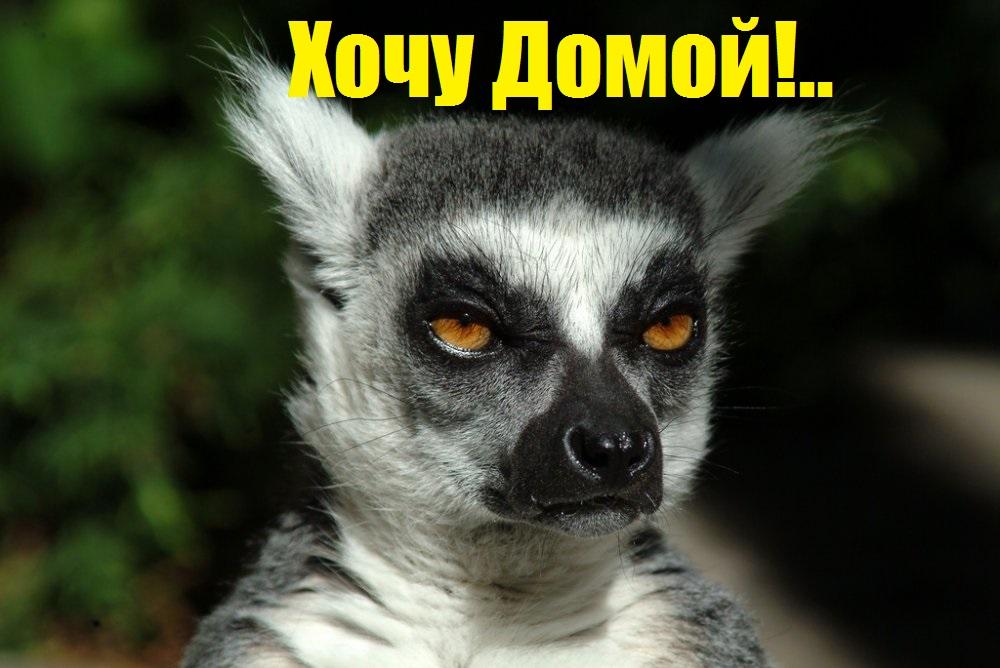 telka-oret-ot-ebli-smotret