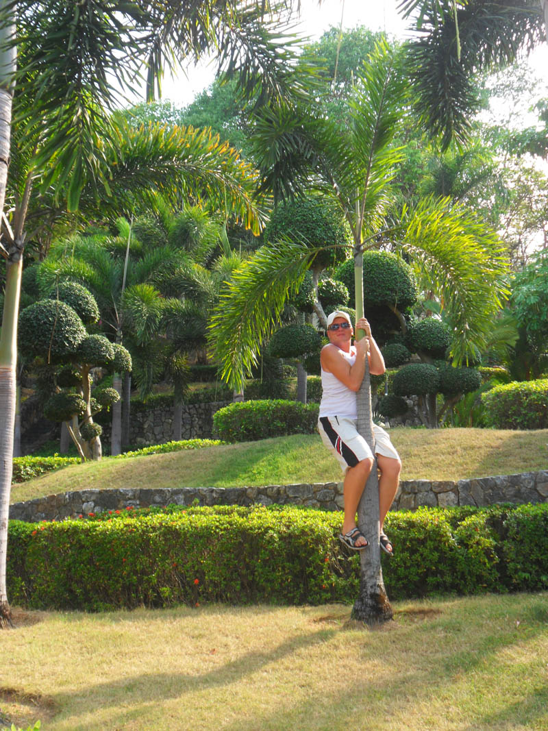 я и пальма