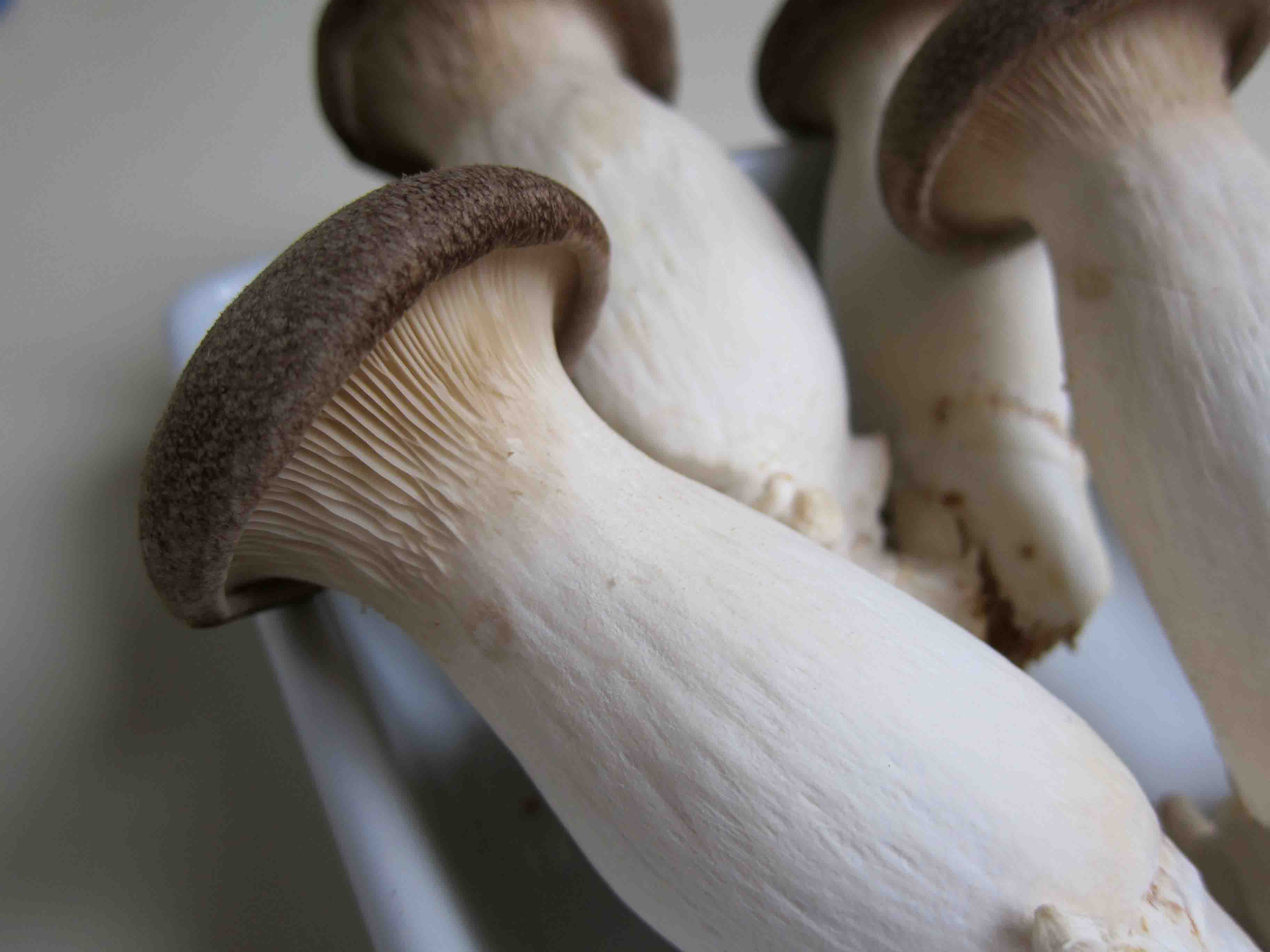 тайские грибы