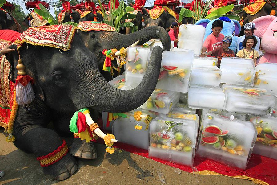Elephants enjoy block of ice containing frozen fruit during Thailand's National Elephant day in Ayutthaya