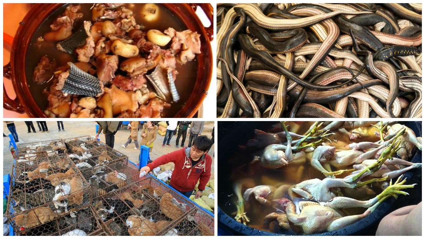 блюдо из мяса кошки, курицы и змеи